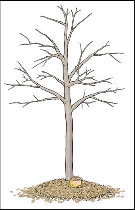 木枯らし4